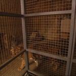 photo-La fauverie (cellules 005 006) en 2004