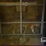 photo-La fauverie (cellule 005) en 2000