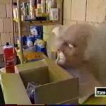 photo-Les loges maquillage et costumes (cellule 020 021) en 2000